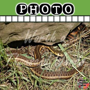 Photo: Snake