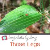 Photo: Spider