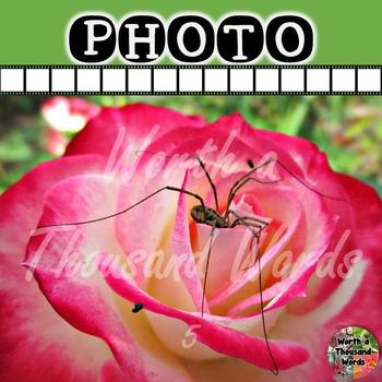 Photo: Spider on Rose