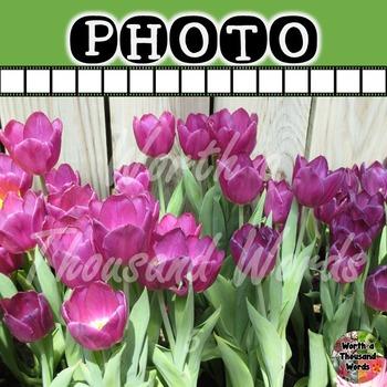 Photo: Spring Flowers - Purple Tulips
