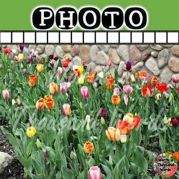 Photo: Spring Flowers - Tulips