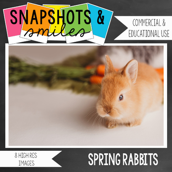 Photo: Spring Rabbits: 8 high res images
