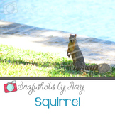 Photo: Squirrel