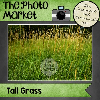Photo: Tall Grass Field