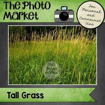 Photo: Tall Grass Field