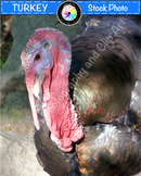 Stock Photo: Turkey
