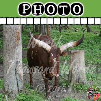 Photo: Watusi
