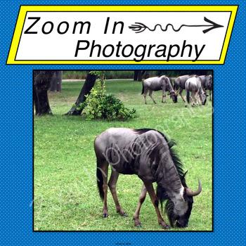 Stock Photo: Wildebeest