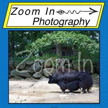 Stock Photo: Yak
