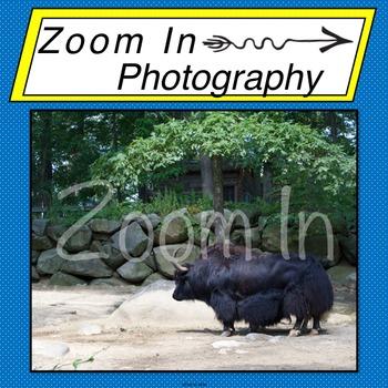 Stock Photo: Yak