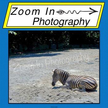 Stock Photo: Zebra