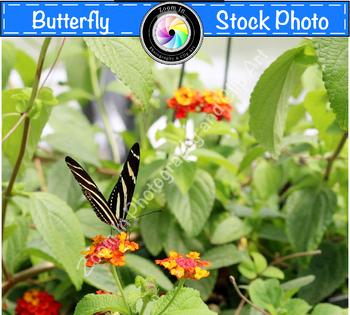Stock Photo: Zebra Longwing Butterfly