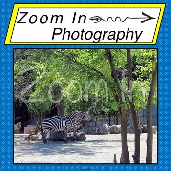 Stock Photo: Zebras