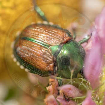 """Stock Photo - """"Insect: Beetle #2"""" - Photograph - Arts & Pix"""