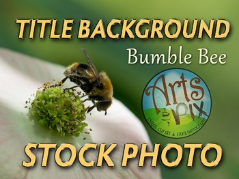 Photograph - Bumble Bee - stock photo - title background -