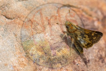 Photograph - Butterfly - stock photo - title background - insects