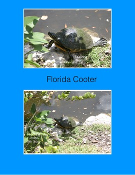 Photos for Commercial Use, Stock Photo- Florida Turtles