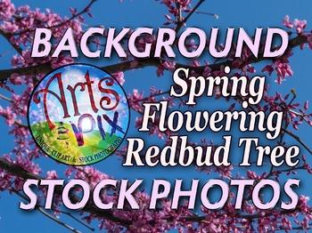 Photograph - Flowering Redbud Tree - flowers