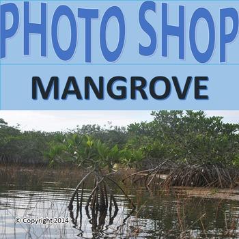 Photograph: Mangrove