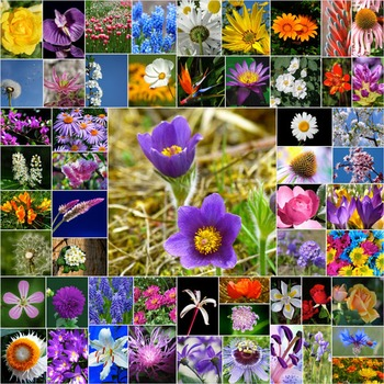 Photos Photographs FLOWERS, clip art