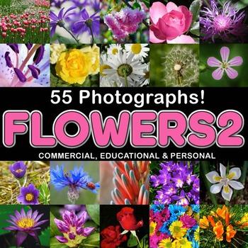 Photos Photographs FLOWERS, clip art