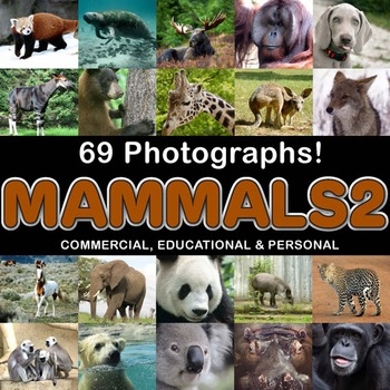 Photos Photographs MAMMALS 2 clip art