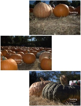 Photos for Commercial Use, Stock Photo- Pumpkins