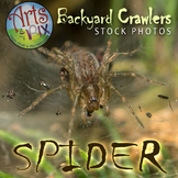 "Stock Photo - ""Arachnid: SPIDER"" - Photograph - Arts & Pix"