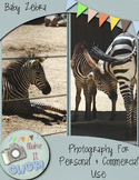 Photograph of Zebra Baby