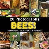 Photos Photographs BEES, clip art