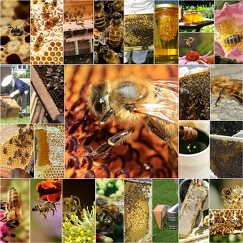 Photos Photographs BEES, clip art