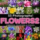 Photos Photographs FLOWERS clip art
