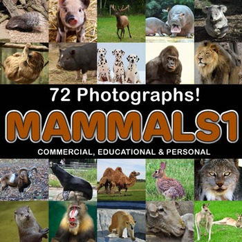 Photos Photographs MAMMALS Clip Art