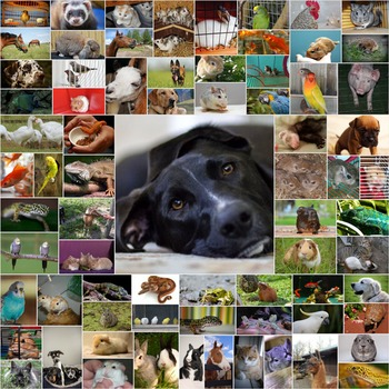 Photos Photographs PETS, clip art