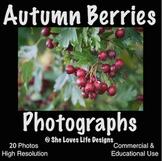 Photographs AUTUMN BERRIES Photos Fall