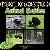 Animal Babies Photos (BUNDLE)