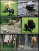 Animal Babies Photos (BUNDLE)