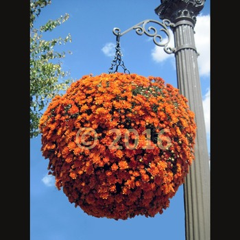 Photographs: Autumn Decorations commercial and personal licenses