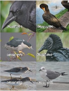 Photographs: Birds 1