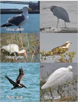 Photographs: Birds 2