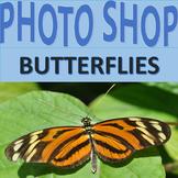 Photographs: Butterflies