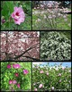 Photos: Flowering Trees and Shrubs