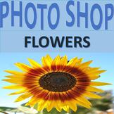 Photographs: Flowers 1