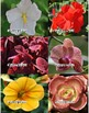 Photographs: Flowers 2
