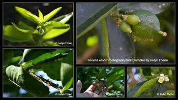 Photographs: Green Lemons, Limes, Bananas & Passionfruits + Bugs! Bundle