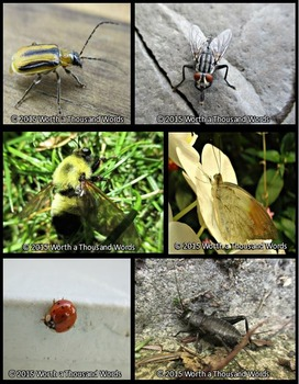 Photographs: Insects