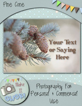 Photographs Pine Cone