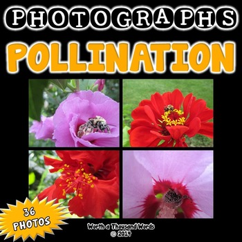 Pollination Photos (BUNDLE)