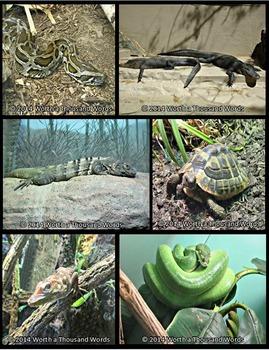 Reptile and Amphibian Photos (BUNDLE)