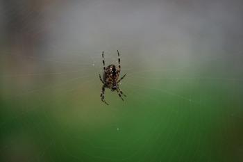 Photographs SPIDERS Photos Fall